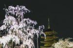 京都はお花見のメッカ!