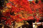 今年の京都の紅葉は素晴らしいです!